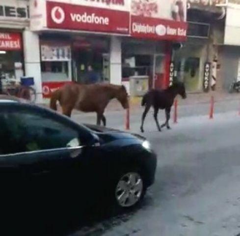 Ana Caddede Gezinti Yapan Başıboş Atlar Şaşırttı