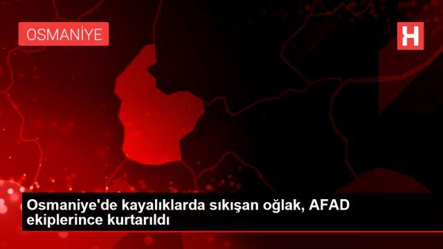 Osmaniye'de kayalıklarda sıkışan oğlak, AFAD ekiplerince ...